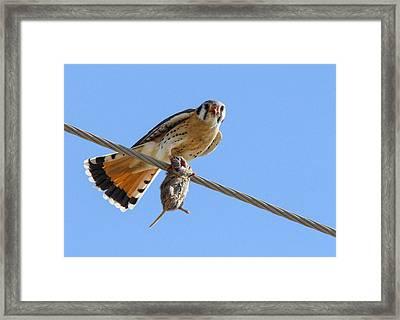 Bird Of Prey Framed Print by Jill Bell