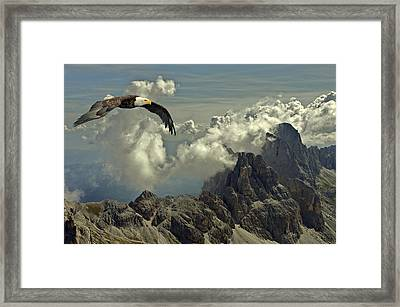 Bird Of Prey Framed Print by Movie Poster Prints