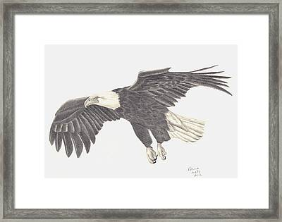 Framed Print featuring the drawing Bird Of Prey by Patricia Hiltz