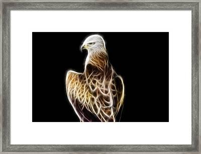 Bird Of Prey Framed Print by Pati Photography