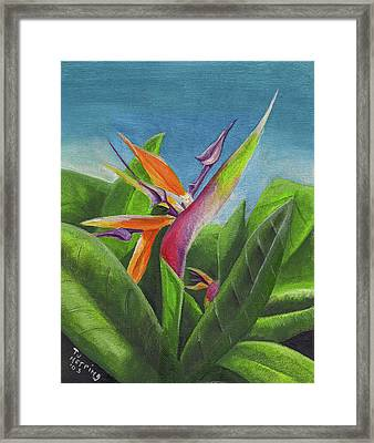 Hawaiian Bird Of Paradise Framed Print
