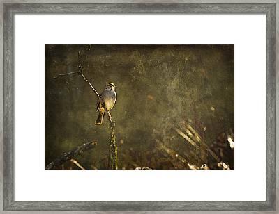 Bird On A Branch Framed Print by Belinda Greb
