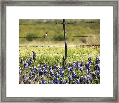 Bird On A Fence Framed Print