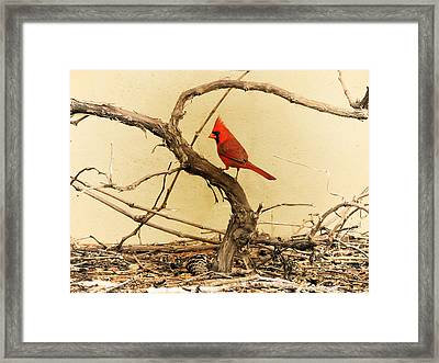 Framed Print featuring the photograph Bird On A Vine by Jayne Wilson