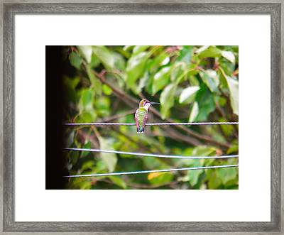 Framed Print featuring the photograph Bird On A Wire by Nick Kirby