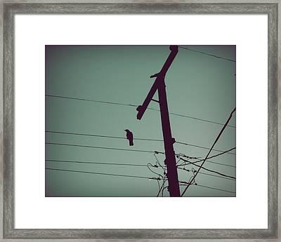 Bird On A Wire Framed Print by Patricia Strand