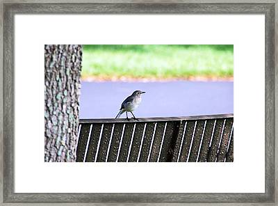 Bird On Bench Framed Print by Aimee L Maher Photography and Art Visit ALMGallerydotcom