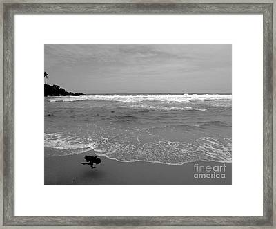 Bird On Kovalam Beach Framed Print