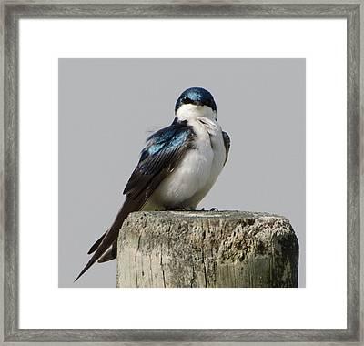 Bird On Post Framed Print