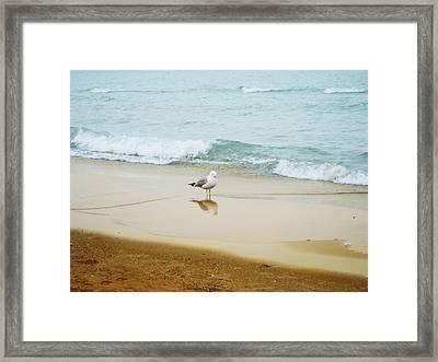 Bird On The Beach Framed Print by Milena Ilieva