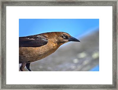 Bird On The Kure Beach Pier Framed Print