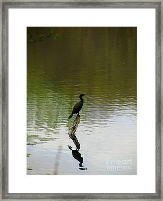 Bird On The Lake Framed Print by Avis  Noelle