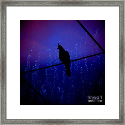 Bird On The Wire ... Framed Print by Chris Armytage