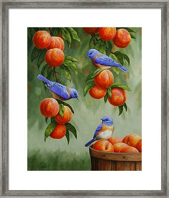 Bird Painting - Bluebirds And Peaches Framed Print by Crista Forest