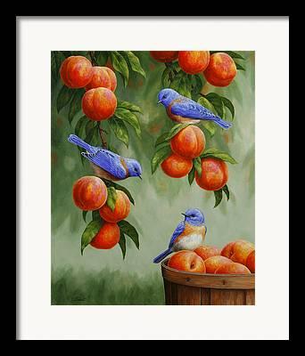 Peach Orchard Framed Prints
