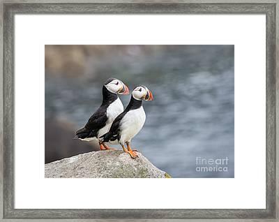 Bird Paradise Framed Print by Evelina Kremsdorf