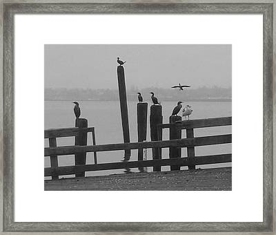 Bird Party In Black And White Framed Print by Karen Molenaar Terrell