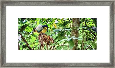 Bird Perching On A Tree, Costa Rica Framed Print by Panoramic Images