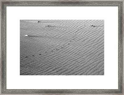 Bird Prints On Beach Framed Print