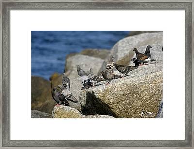 Bird Rock Beach Framed Print