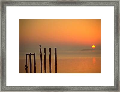 Bird Santuary Framed Print by Tony Ambrosio