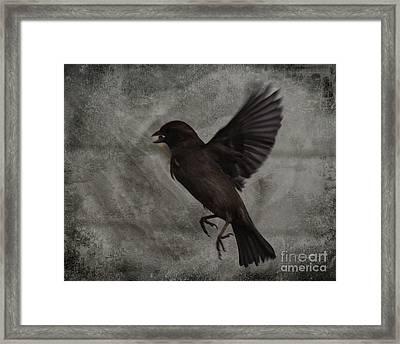 Bird Seed Framed Print by Jim Wright