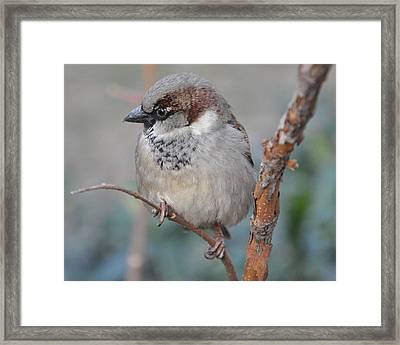 Bird Shot Framed Print