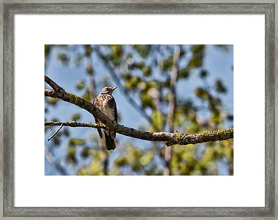 Framed Print featuring the photograph Bird Sitting On Brach by Leif Sohlman