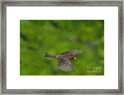 Bird Soaring With Food In Beak Framed Print