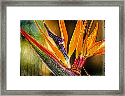 Bird Talk - Bird Of Paradise By Sharon Cummings Framed Print