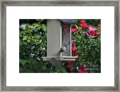 Framed Print featuring the photograph Bird Time To Fly by Thomas Woolworth