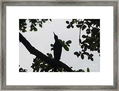 Bird - Grackle Twilight Moment - Luther Fine Art Framed Print by Luther Fine Art