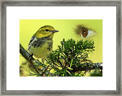 Bird Watching Framed Print by Inspired Nature Photography Fine Art Photography