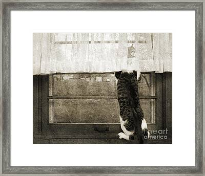 Bird Watching Kitty Cat Bw Framed Print