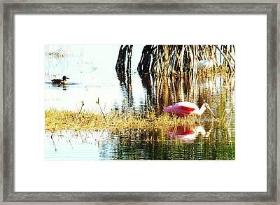 Bird Watching Framed Print by Van Ness