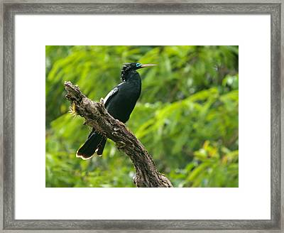 Bird With Blue Eyes Framed Print by Judith Russell-Tooth