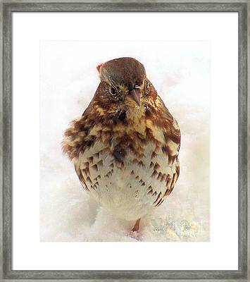 Framed Print featuring the photograph Fox Sparrow In Snow by Janette Boyd
