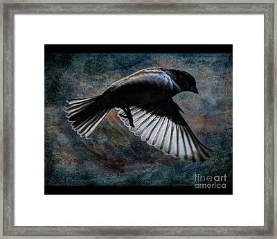 Bird7 Framed Print by Jim Wright