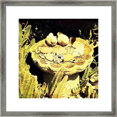 Birdbath Framed Print by Beth Williams