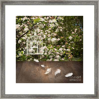 Birdcage With Feathers Framed Print by Amanda Elwell