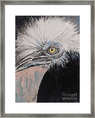 Birdeye Crown Horn Bill Framed Print