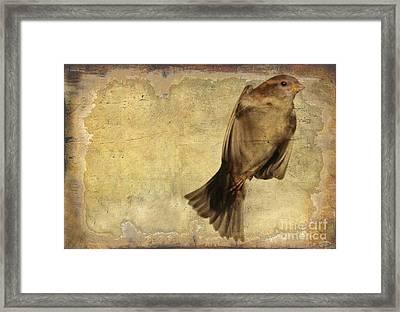 Birdness 2 Framed Print by Jim Wright