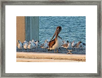 Birds - Among Friends Framed Print