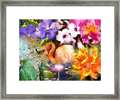 Birds And Flowers Framed Print by Van Ness