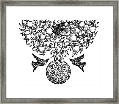 Birds And Fruit Tree Engraving Framed Print by