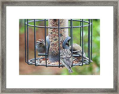 Framed Print featuring the photograph Birds At Lunch by Ellen O'Reilly