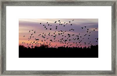 Framed Print featuring the photograph Birds At Sunrise by Aimee L Maher Photography and Art Visit ALMGallerydotcom