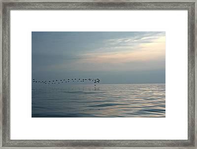 Birds At Sunset In Sister Bay Framed Print