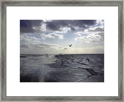 Birds At The Beach 2 Framed Print