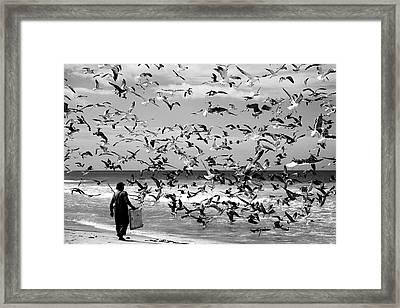 Birds Birds Framed Print